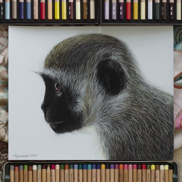 Koczkodan czarnosiwy / pastele suche / 24x30 cm